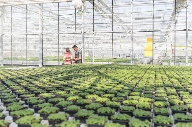 Man and woman in greenhouse examining plants — Stock Photo
