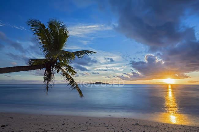 Сейшельські острови, Прален, анс-Kerlan, кокосова Пальма та острів кузен на заході сонця — стокове фото