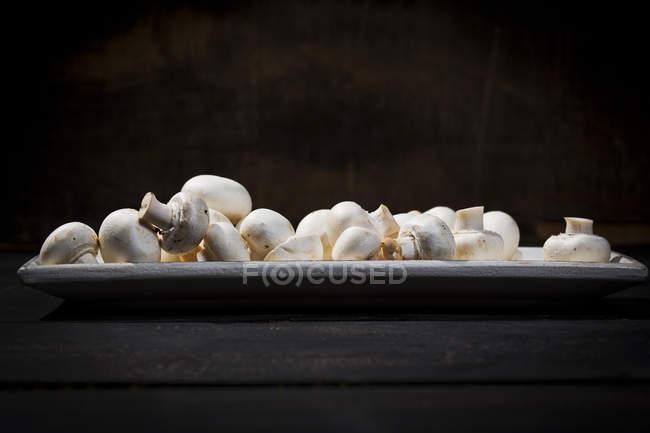 Placa de champiñones delante de fondo oscuro - foto de stock