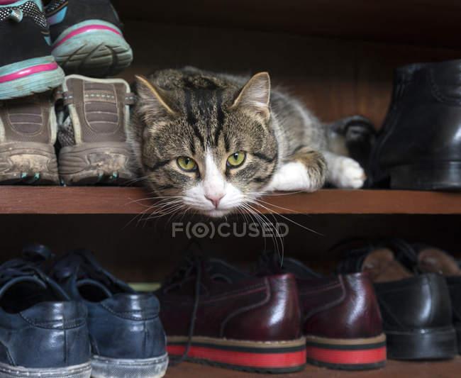 Katze liegend im Schuhregal und Blick in die Kamera — Stockfoto