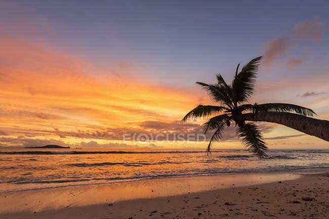 Seychelles, Praslin, Anse Kerlan, Coconut palm and Cousin Island at sunset — Stock Photo