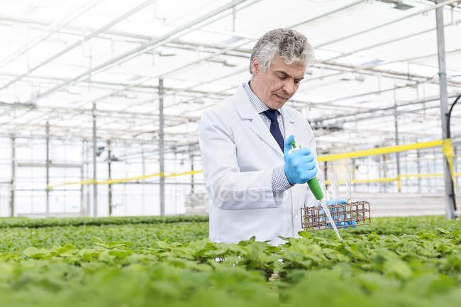 Scientist in greenhouse pipetting plants — Stock Photo