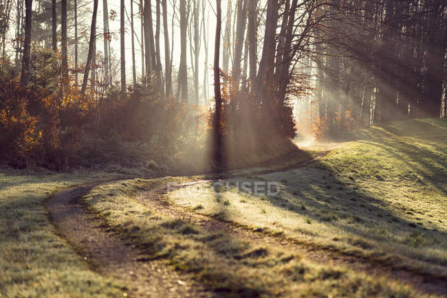 Forest track and sunlight in the morning, Austria — Stock Photo