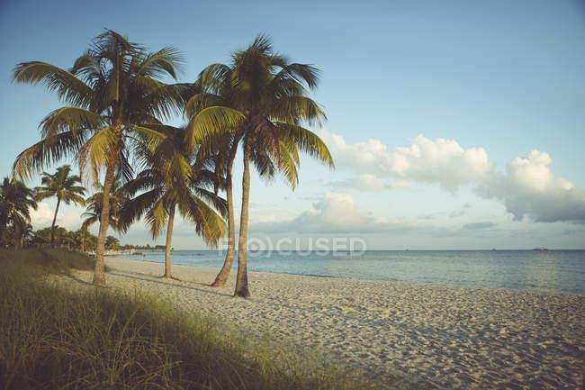 USA, Florida, Key West, palme sulla spiaggia — Foto stock