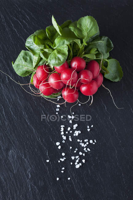 Bando de rabanetes vermelhos com sal — Fotografia de Stock