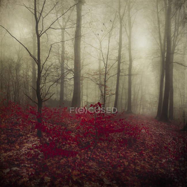Красные осенние листья в зимнем лесу, Германия — стоковое фото