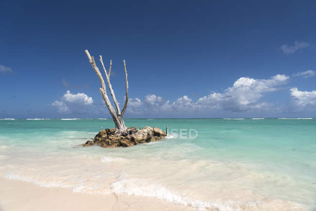 Dominican Republic, Punta Cana, dead tree trunk in the ocean, Playa Bavaro — Stock Photo