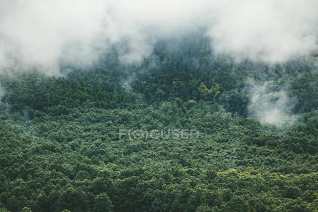 Болгария, плохая погода, туман над лесом — стоковое фото