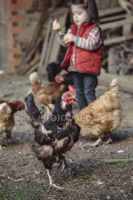 Ritratto di gallina nera in un cortile di fattoria con bambina sullo sfondo — Foto stock