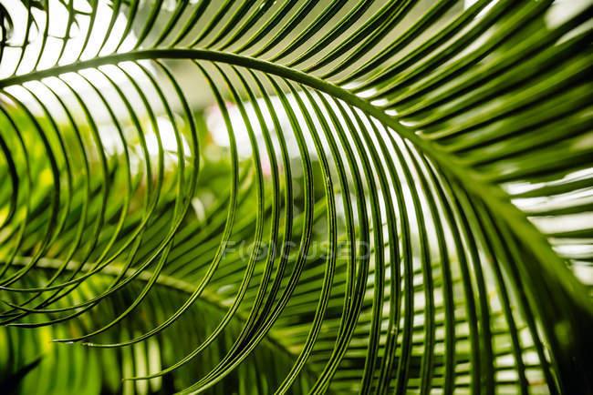 Folhas de palmeira vista closeup — Fotografia de Stock