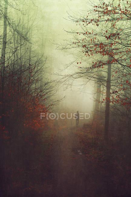Силуэт человека ходить в осенний лес — стоковое фото