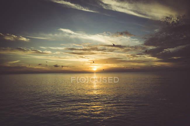 États-Unis, Floride, Naples, coucher de soleil sur la mer et les oiseaux volants — Photo de stock