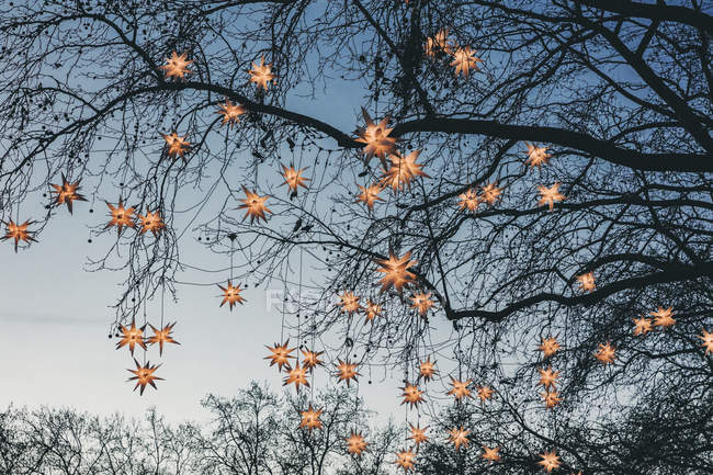 Decoration of paper stars garland lights on tree — Stock Photo