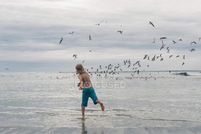 Франції, Бретань, Finistere, Pointe de la Torche, хлопчика на пляжі chasing чайок — стокове фото