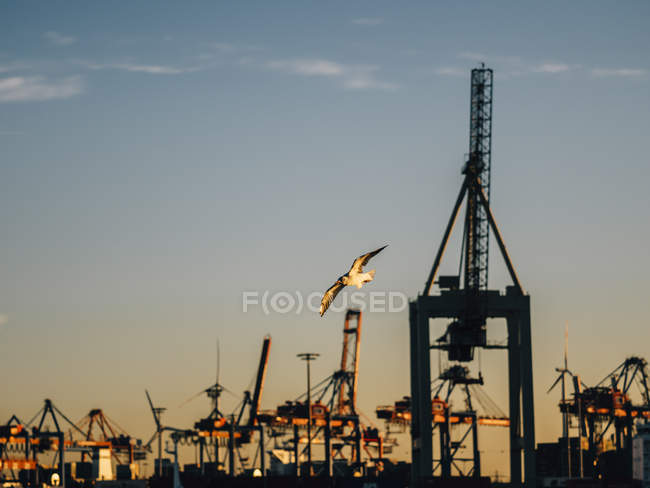 Germany, Hamburg harbor, Crane facility and flying seagull in the evening — Stock Photo