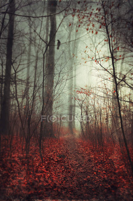 Forest track with autumn leaves — Stock Photo