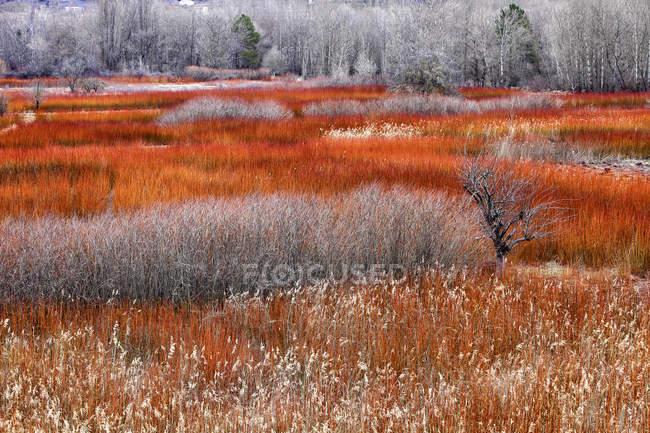 Плетеные посевы осенью — стоковое фото