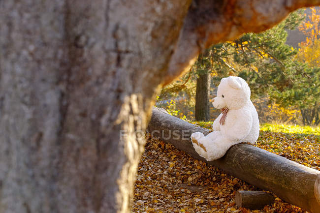 White teddy bear sitting on dead wood in the forest — Stock Photo