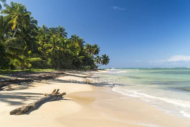 Полуостров Самана, Доминиканская Республика Лас Терренас, пляж-Эль-Портильо — стоковое фото