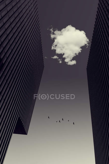 Cloud between office towers, flying birds, digitally manipulated — Stock Photo