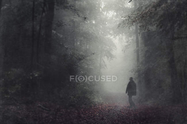 Силуэт человека ходить в осенний лес в дымке — стоковое фото