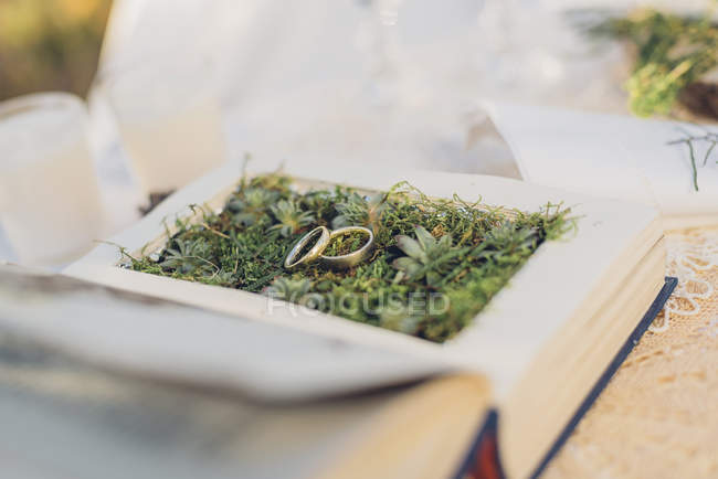 Two wedding rings lying on moss in a prepared book — Stock Photo