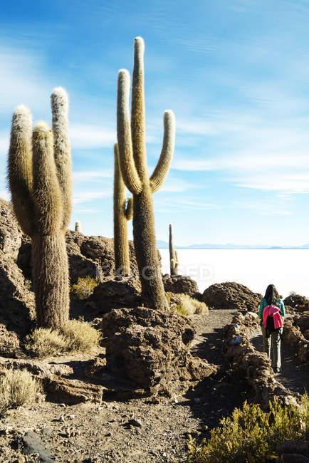 Bolivia, Atacama, Altiplano, Salar de Uyuni, mujer que camina entre los cactus, Isla Incahuasi - foto de stock