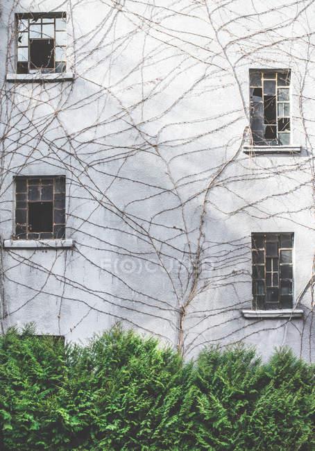 Facciata della casa con le finestre rotte e morto rampicante — Foto stock