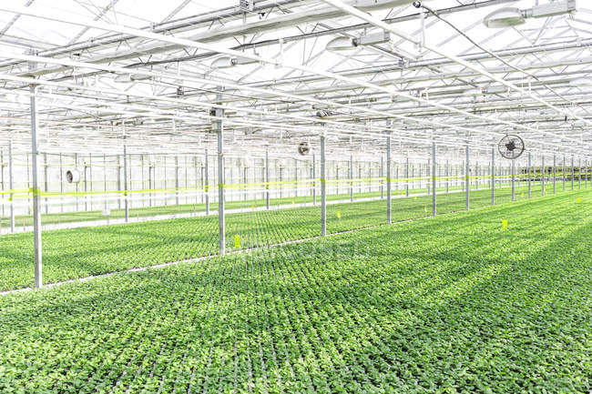 View of herbal plants growing in greenhouse — Stock Photo