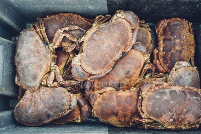 Captures de grands crabes en boîte — Photo de stock