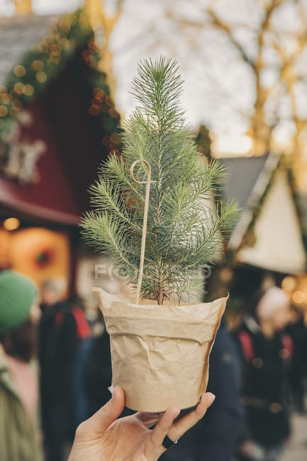 Hand holding a small tree on the Christmas Market — Stock Photo
