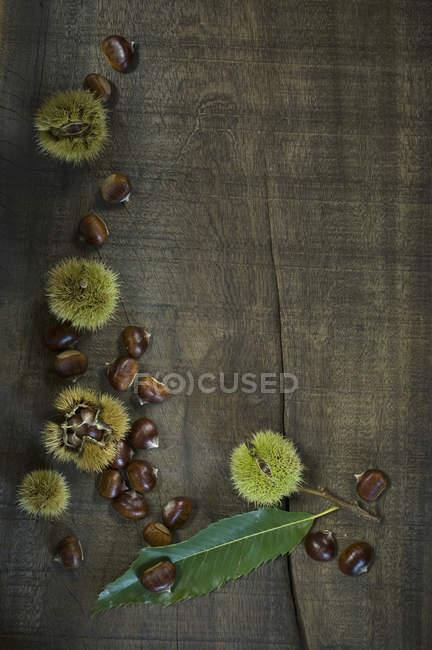 Folha e doce castanhas na madeira escura — Fotografia de Stock