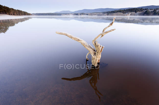 Espanha, Soria, raiz na água do reservatório de La Cuerd la del Pozo — Fotografia de Stock
