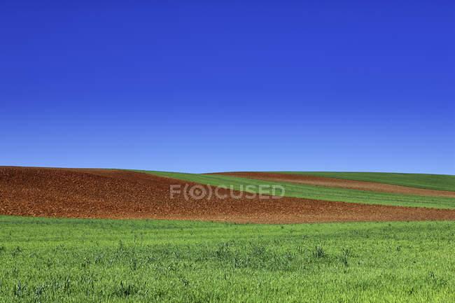 Campo coltivato a cereali in primavera — Foto stock