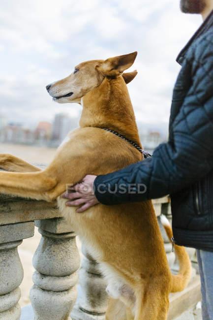Hombre y su perro mirando a distancia - foto de stock