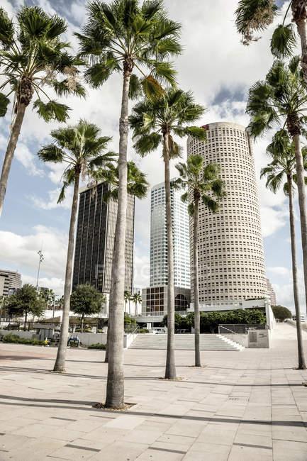 Stati Uniti, Florida, Tampa, downtown e alberi in primo piano — Foto stock