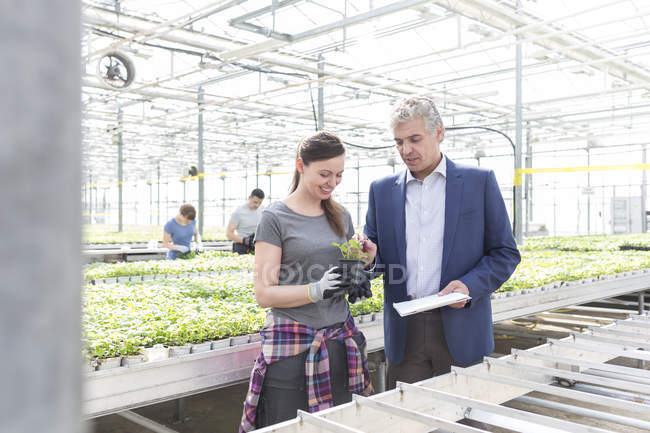 Businessman and woman in greenhouse examining plant — Stock Photo