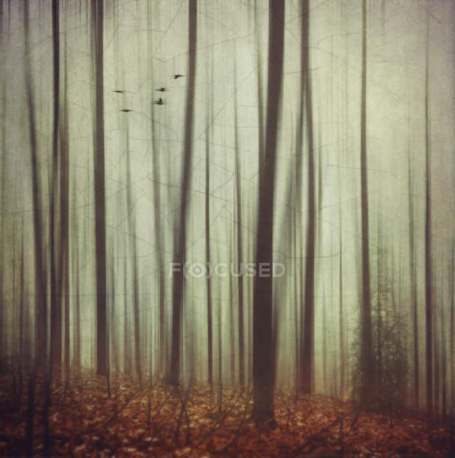 Floresta outonal com árvores sobre folhas — Fotografia de Stock