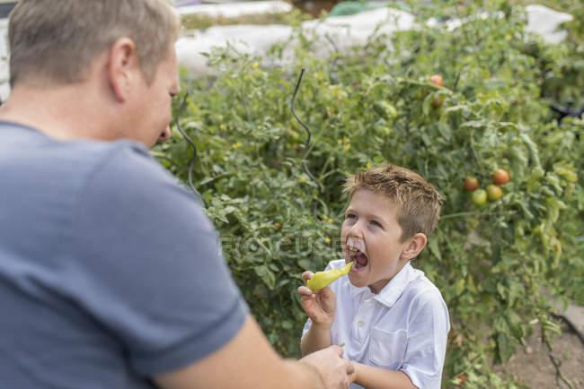 Lttle junge Essen wies Pfeffer während sein Vater beobachtete ihn — Stockfoto