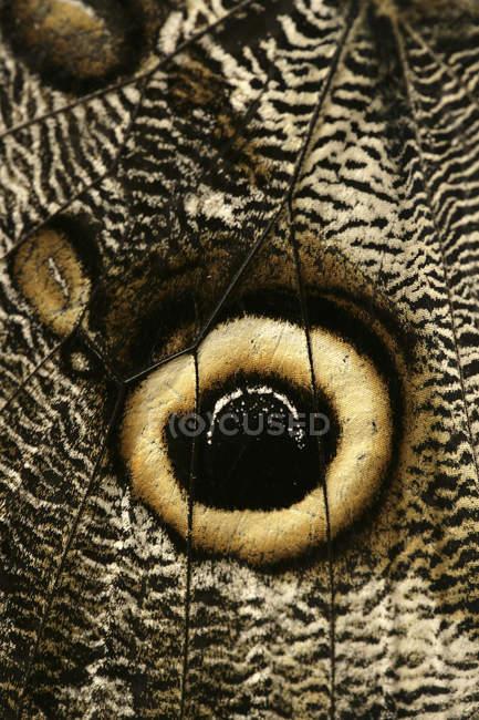 Глаз пятен на вдохновлением бабочки — стоковое фото