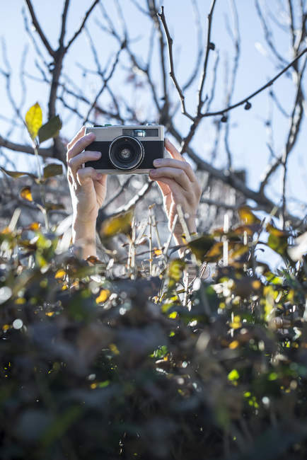 Female hands shooting pictures over a hedge with an old camera — Stock Photo