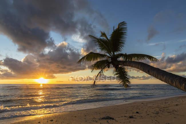 Сейшелы, Праслин, Анс-Керлан, кокосовая пальма и остров Кузен на закате — стоковое фото
