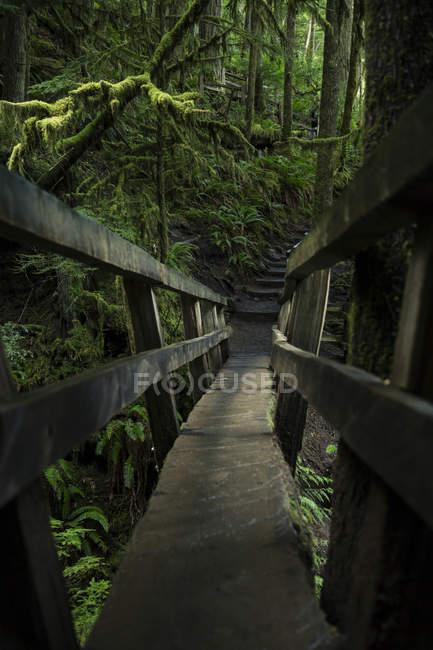 Дерев'яні foothbridge в лісі на Олімпійському Національний парк, штат Вашингтон, США — стокове фото