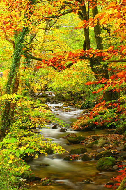 Espagne, Asturies, Hermo dans le parc naturel automnal de Fuentes del Narcea — Photo de stock