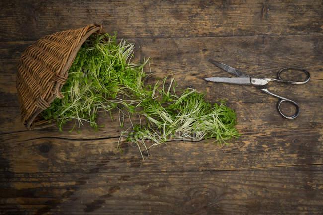 Vista superior de berro verde con cesta y tijeras en madera - foto de stock