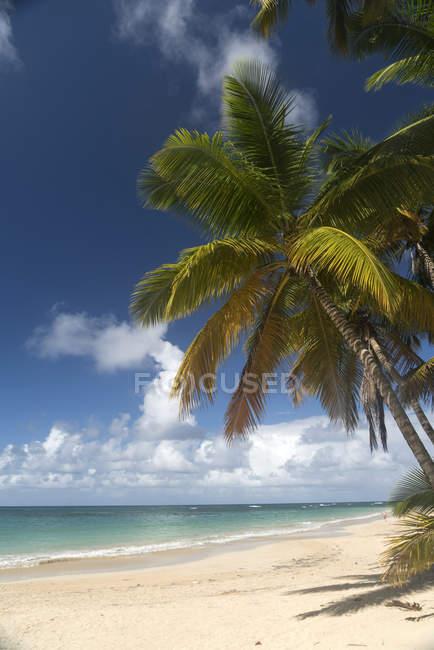 Доминиканская Республика, полуостров Самана, пляж Лас Терренас в дневное время — стоковое фото