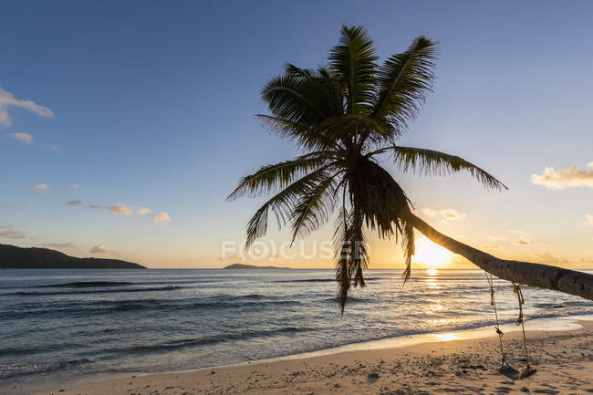 Seychelles, La Digue, Anse Fourmis, beach with palm and swing at sunset — Stock Photo