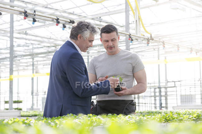 Businessman and worker in greenhouse examining herbal plants — Stock Photo
