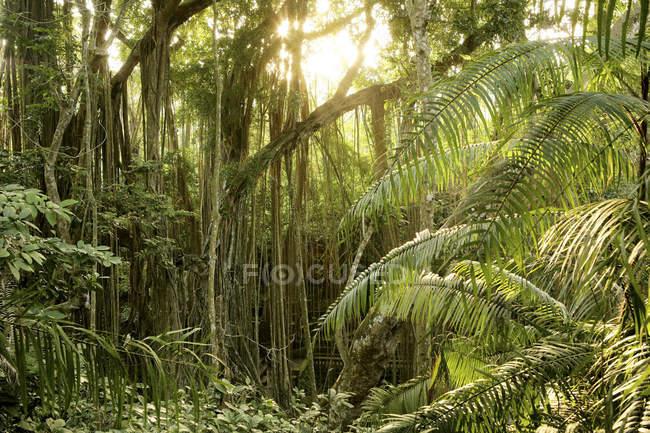 Indonésie, Bali, Forêt de Singes Sacrés pendant la journée — Photo de stock