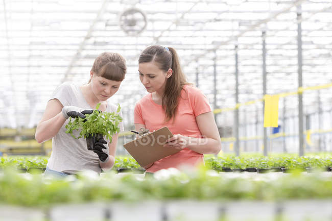 Two women in greenhouse examining plants — Stock Photo